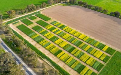 Intercropping and companion cropping… what's new?
